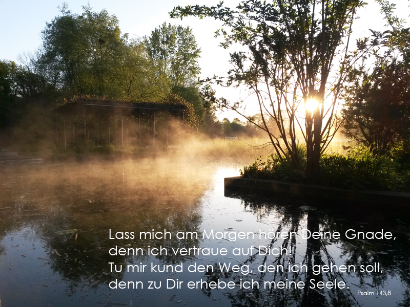 Psalm143,8